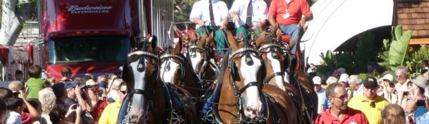 Clydesdales: 20110805_165643-sjb